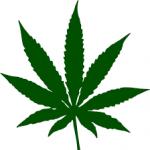 Cannabis Corner